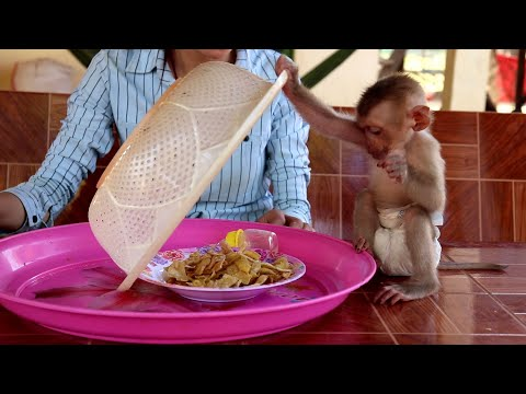 Awesome ! Baby Monkey Rocky Tries To Open The Basket Again And Again To Get Food Fro Eat