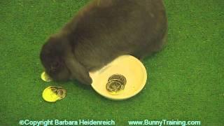 Amazing Rabbit Training Examples