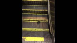 Patkány a futópadon