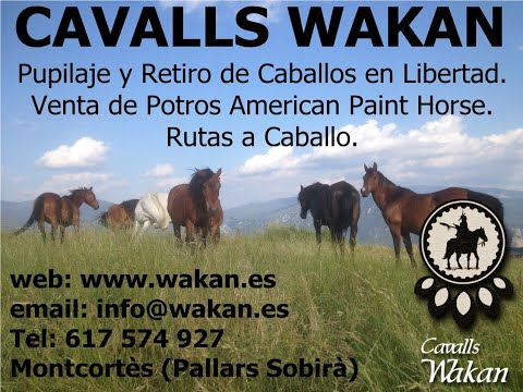 Video Nuestros Caballos Autor: Imgagen Miniatura Youtube