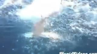 サメにサメを奪われる