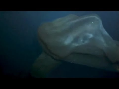 DEEP SEA BLOB CREATURE
