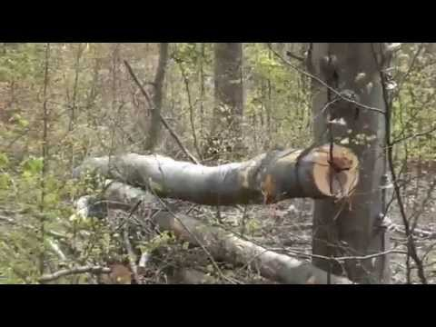 Zrywka drewna Bieszczady - Tree logging Bieszczady