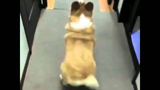 Dog Twerking To Bubble Butt