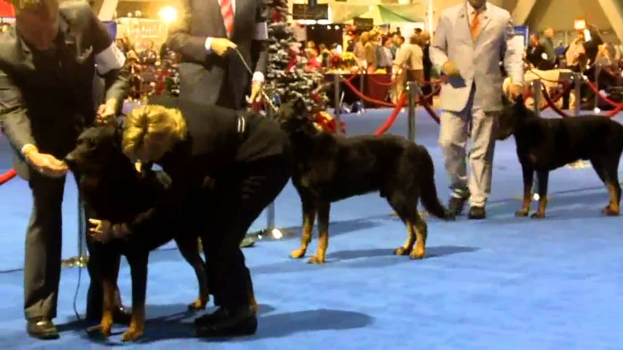 Akc Dog Show Long Beach