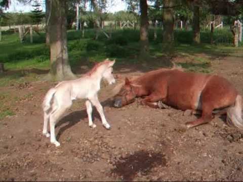 The world's cutest baby horse ! - Horses Video