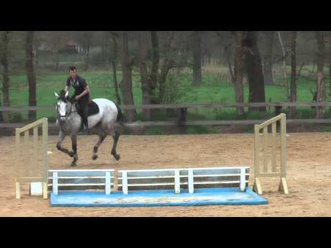 5 yo approved stallion by clovis 111 x recruut x voltaire