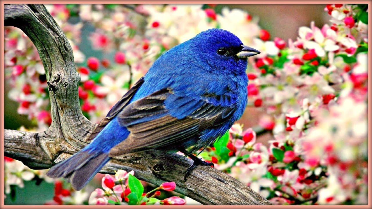 Sound therapy morning birds youtube