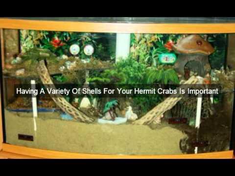 Homemade Hermit Crab Habitat Hermit Crab Habitat