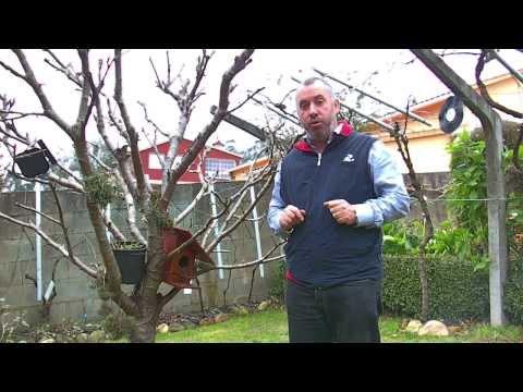 Navaja portuguesa para injertos de arboles y arbustos. 2014.