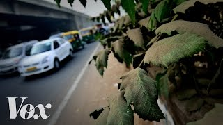 Why cities should plant more trees