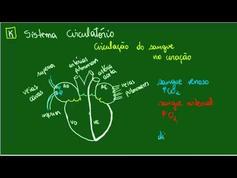 Sistema Circulatório - Circulação no coração - Fisiologia - Biologia