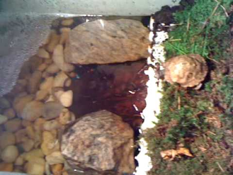 My Box Turtle Tank - YouTube