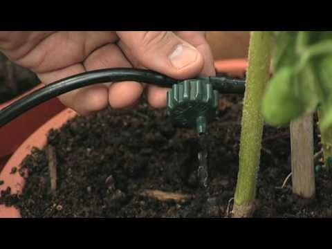 Drip Irrigation in a Polytunnel - V75