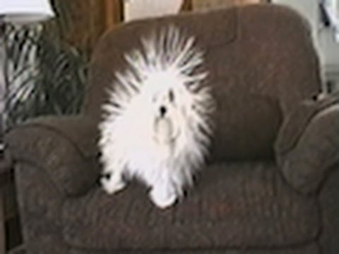 Static Dog