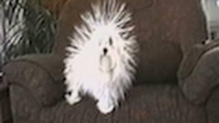 Cute Static Dog