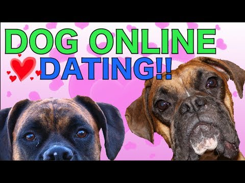 0 Brock the Boxer: DOG ONLINE DATING!!!