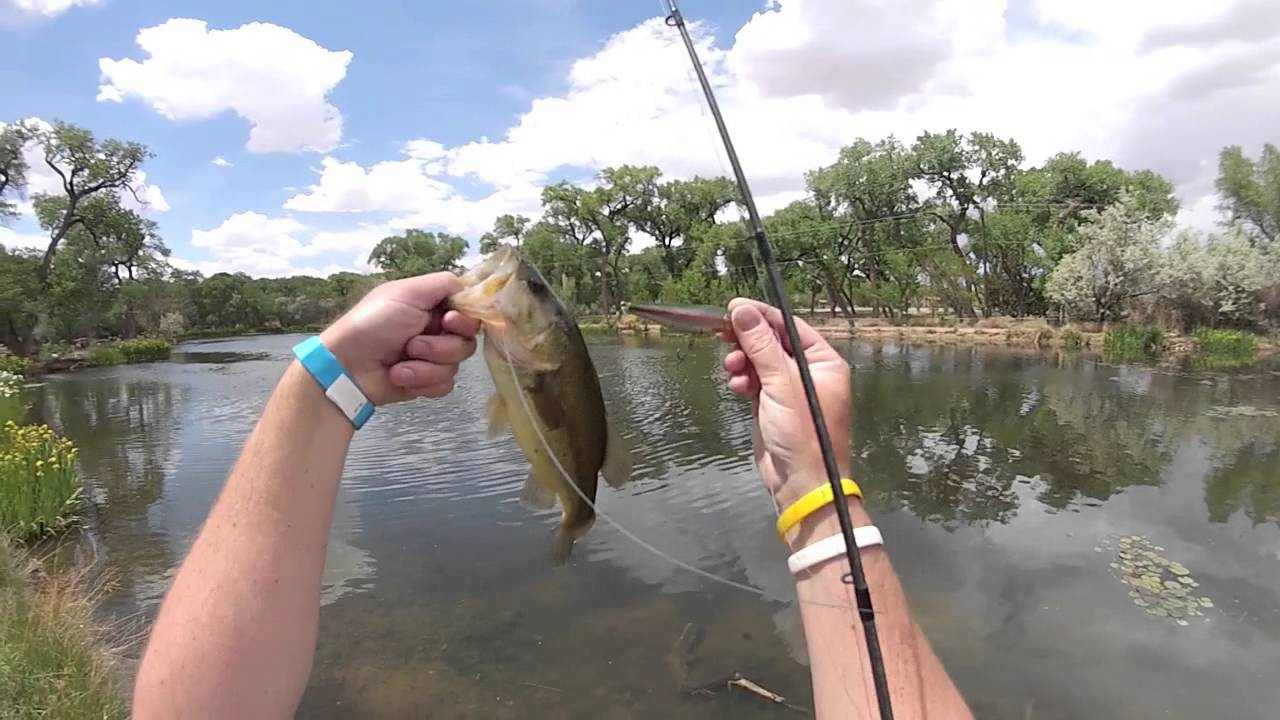 Top water bass fishing ar lures youtube for Top water bass fishing
