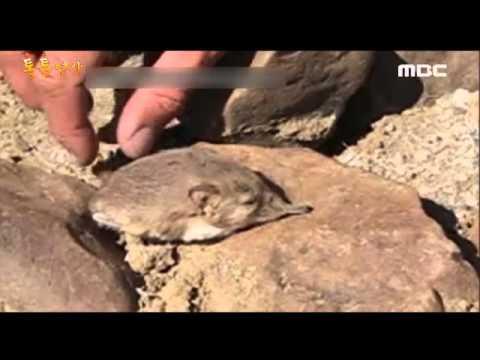 신종 코끼리땃쥐 발견!