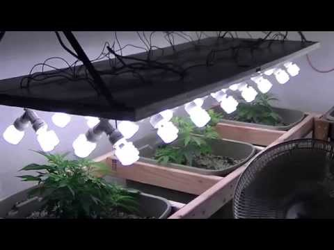 Organic CFL indoor Medical Marijuana Grow Part 1