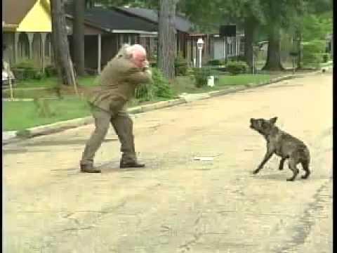 image vidéo كلب خطير يهاجم رجل
