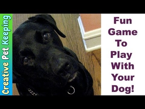 How to teach your dog a fun searching game