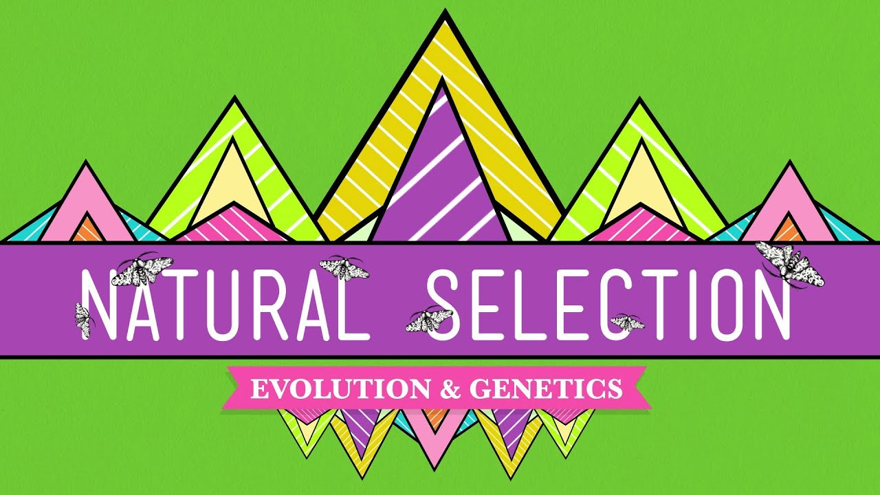 Displaying 17 gt  Images For - Natural Selection Examples   Natural Selection Examples For Kids