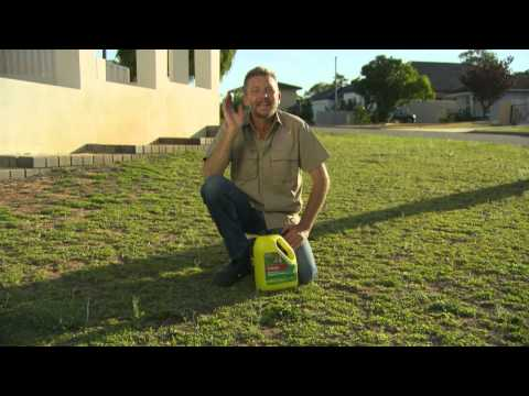 The Garden Gurus WA Easter Special - Controlling Weeds in Lawn