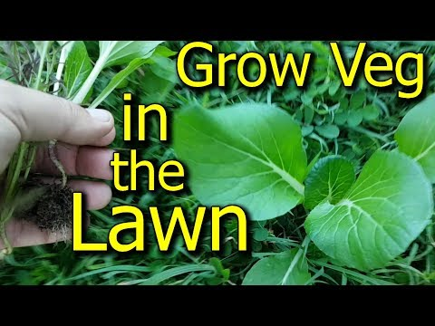 Grow Vegetables in Your Lawn or Grassed Backyard - Plus Other Gardening Tips