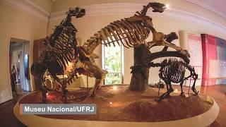 Paraná pode ter ovos de pterossauros