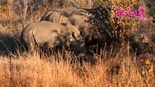 Safari Na África Do Sul