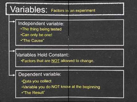 SCI 7-Variables and Groups