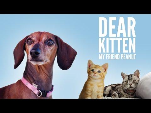 애완동물 사료광고로 배우는 영어표현