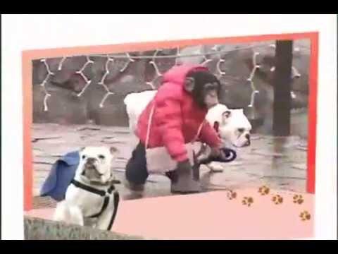 Đười ươi dắt chó đi xe bus -Phần 1 - [Tại nhật bản]