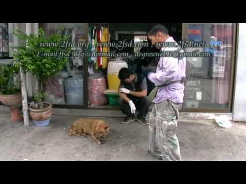 Dog rescue 191 Nasal VG.Tumor เนื้องอกโพรงจมูก