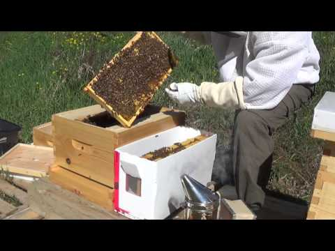 Beginner Bee Keeping - Installing First NUCs