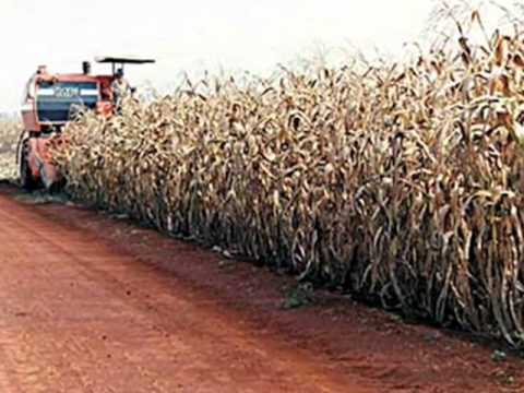 agricultura - colheitadeiras e muito mais
