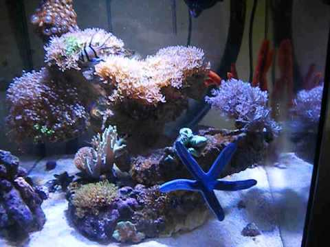 marine aquarium update with new clown fish