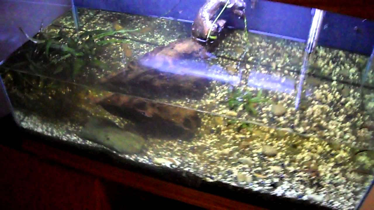 How to move a fish tank part 1 youtube for Moving fish tank