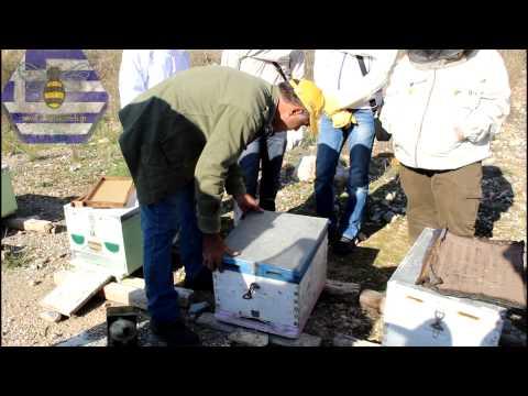 Μελισσοκομία για αρχάριους - Πρακτική στην κυψέλη