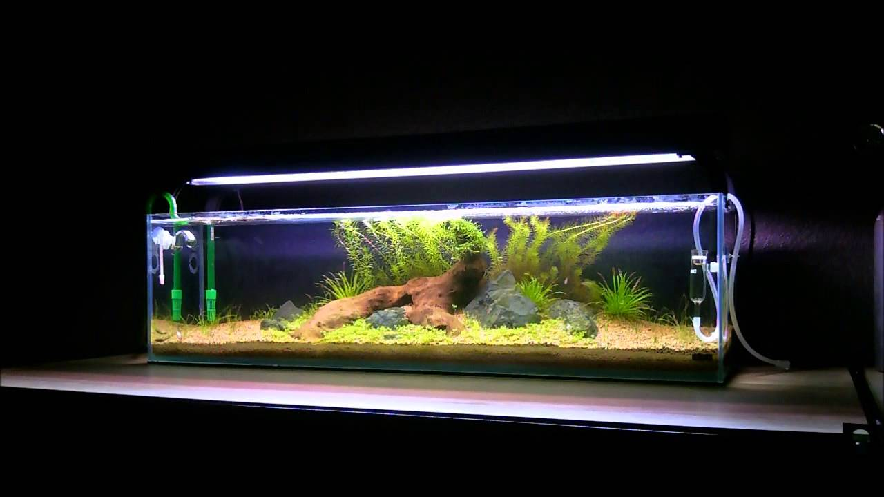 Mr aqua 12g long youtube for Google fish tank mrdoob
