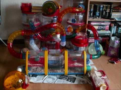 Crazy Hamster Cages, Part 1!, An array of incredibly crazy (and stupid) Hamster Cages! Imagine cleaning them! Crazy Hamster Cages, Part 2: http://uk.youtube.com/watch?v=7dlmKyTacpw Crazy ...