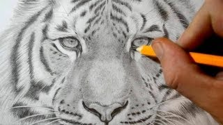 How To Draw A Tiger Realistic Pencil Drawing