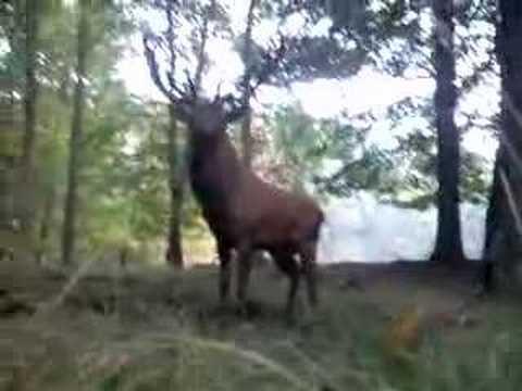 Bliskie spotkanie z jeleniem