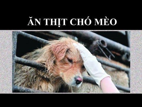 Ăn Thịt Chó Mèo Tại Trung Quốc