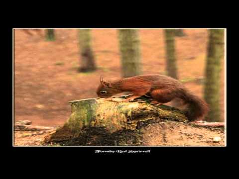 Formby Red Squirrel Reserve Liverpool Merseyside