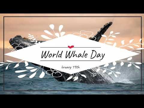 19 Февруари - Световен ден на китовете