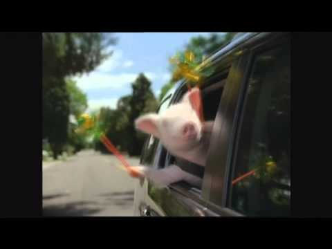 GEICO Commercial - Did the little piggy cry wee wee wee all the way home?