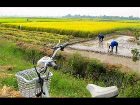 QUE HUONG THAI BINH