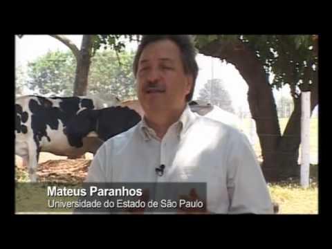 2/2 - Transporte de bovinos vivos para o abate - rota Brasil - Líbano